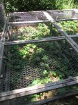 Wooden frames covered with chicken wire lids