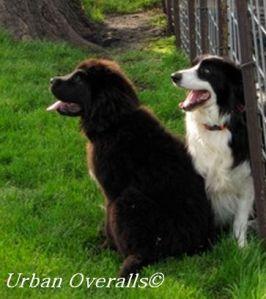 neighborhood dogs - photo by Amy Meyer
