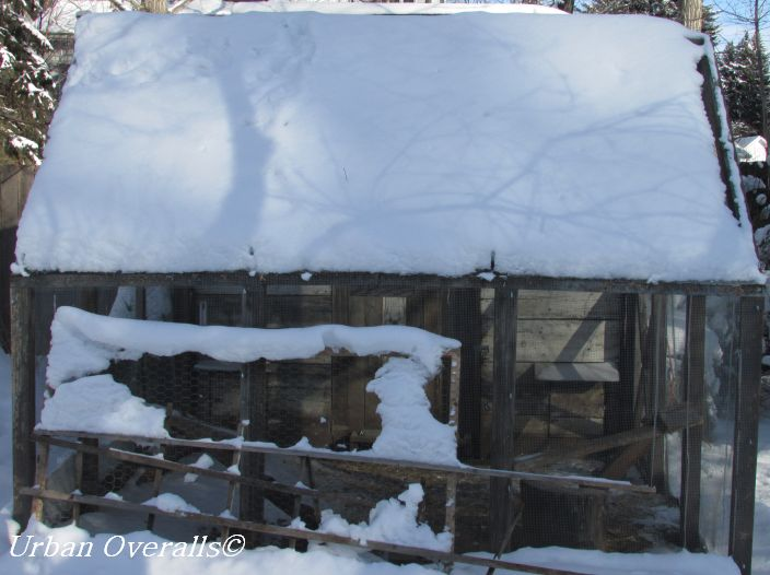 Winter Benefits To A Covered Chicken Run Urban Overalls