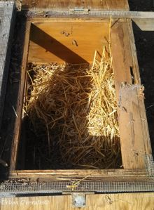 nest box in chicken tractor