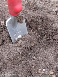 compost in a garden bed