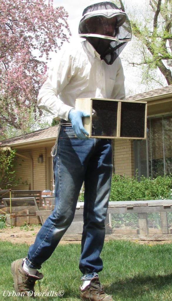 dressed for handling bees