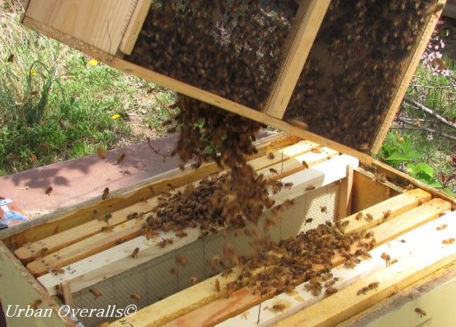 emptying bee package