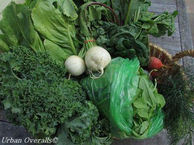 basket of CSA produce
