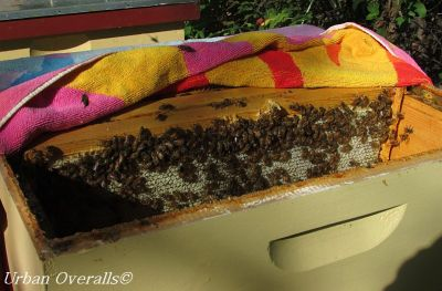 towel laid across honey super