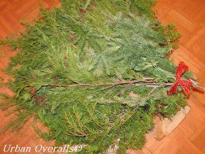 variety of fresh evergreens