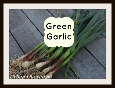 harvested green garlic