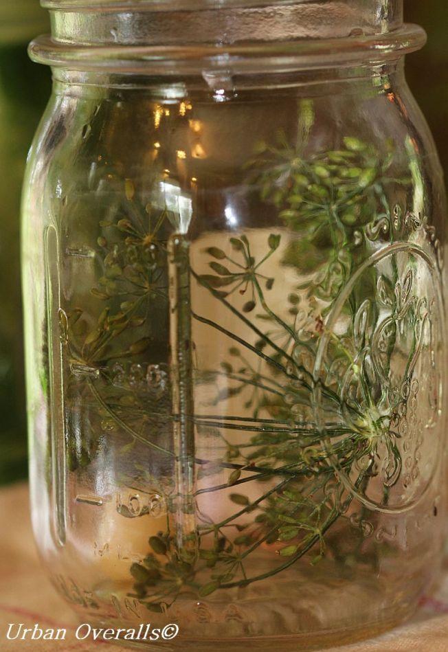 sterilized jar with dill head