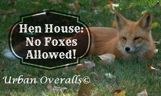 keep foxes out of the hen house